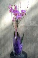 orquideas a domicilio madrid